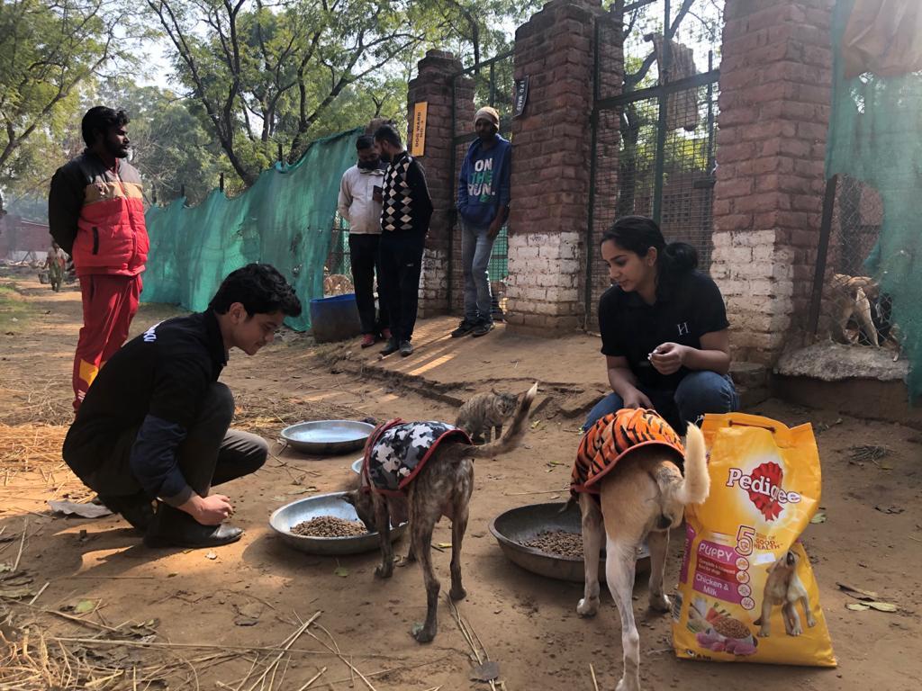 Animal CSR 3