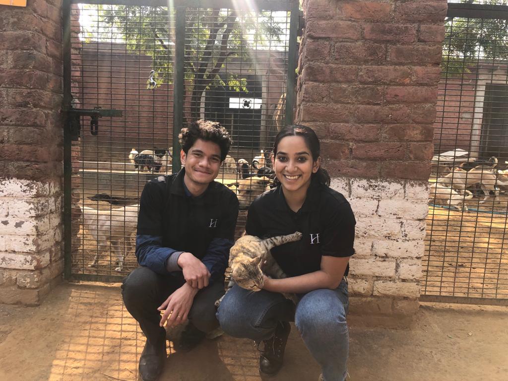 Animal CSR 8